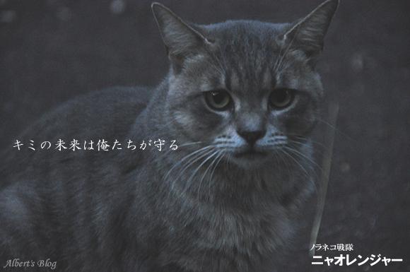 ニャオシルバー1.JPG