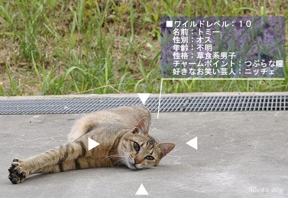 ニャンコスカウター.JPG
