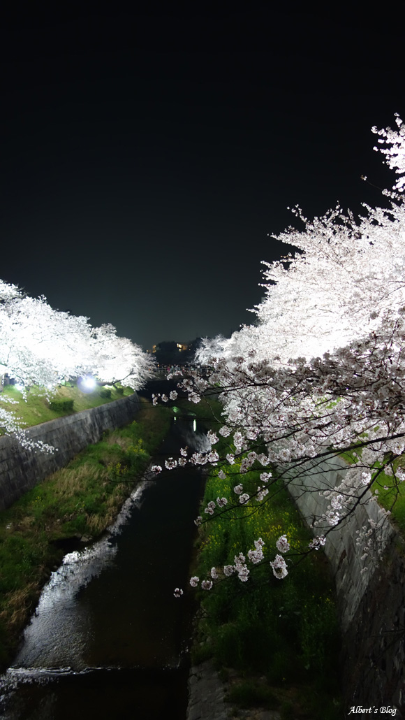 山崎川の桜.jpg