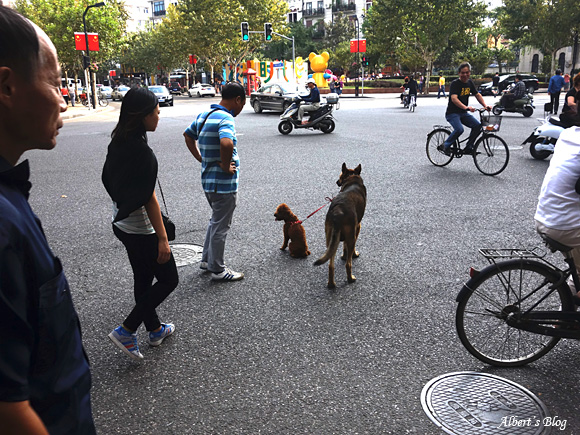 散歩犬.jpg
